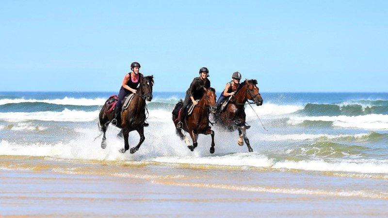 Caval&go : l'amour du cheval et du voyage 1