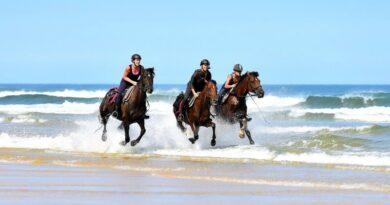 Caval&go : l'amour du cheval et du voyage 2