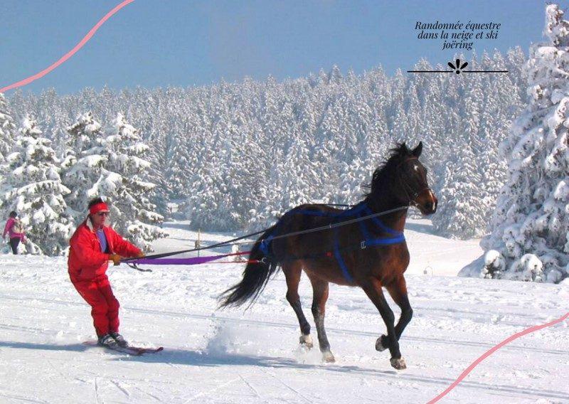 Le cheval, atout bien-être et équilibre mental 2