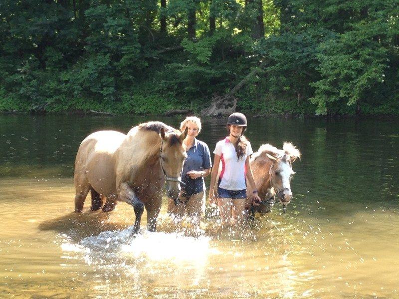 Le cheval, atout bien-être et équilibre mental 1