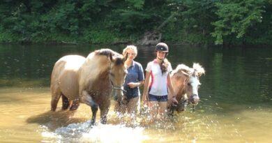 Le cheval, atout bien-être et équilibre mental 5