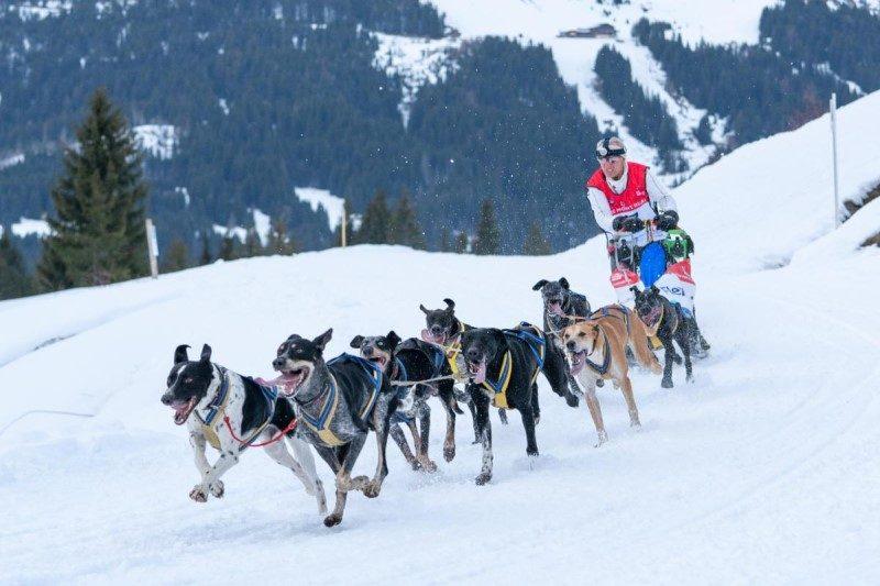 La Grande Odyssée Savoie Mont Blanc dans les starting blocks 4