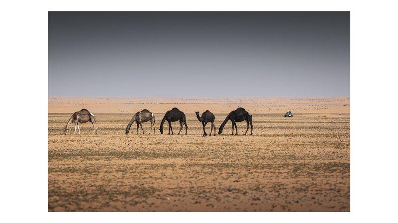 Avec le Dakar, l'Arabie Saoudite s'offre une vitrine touristique et son lot de polémiques 1