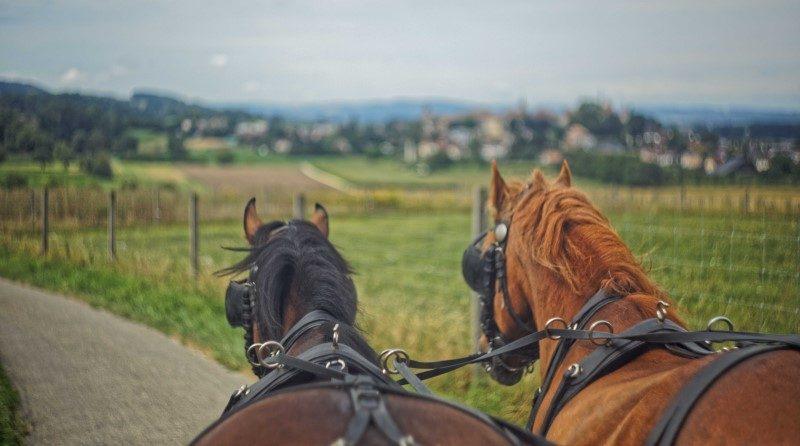 Avec « La route du poisson », les chevaux de trait reprennent du service 1