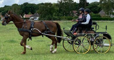 En Vallée de Chevreuse, le cheval au coeur d'activités de teambuilding