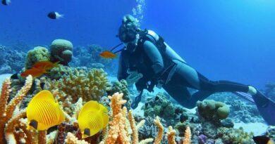 La Guadeloupe côté mer : cinq îles, cinq ambiances 8