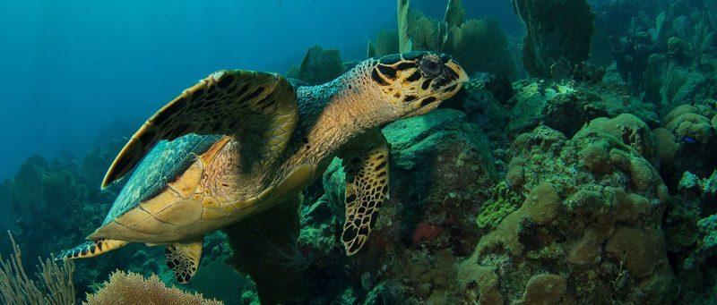 La Guadeloupe côté mer : cinq îles, cinq ambiances 3