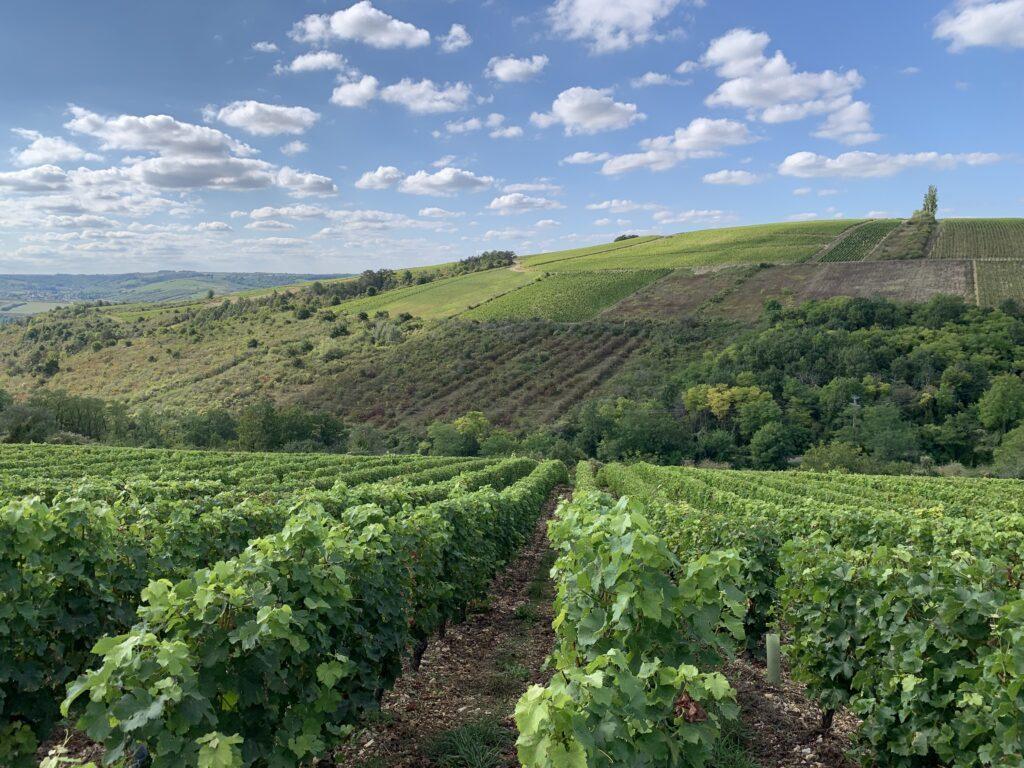 L'Yonne, cœur nature qui revigore 8